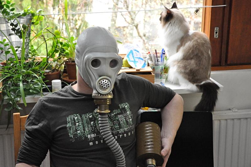 Ratkaisu kissa-allergiaan